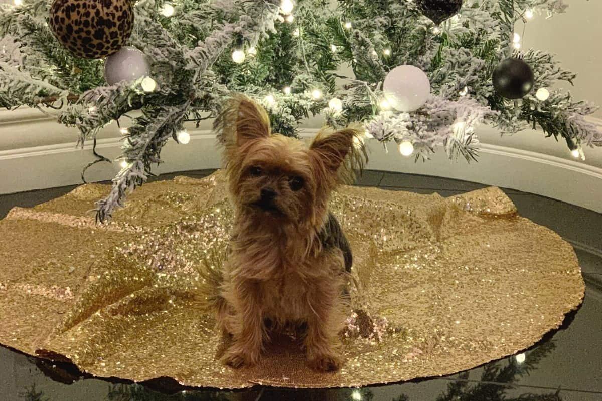 Best Christmas Yorkie dog tree