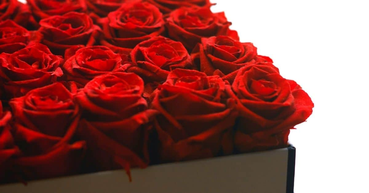 preserved red roses gift for wife